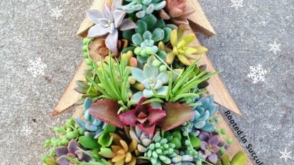 Christmas Tree Succulent Workshop
